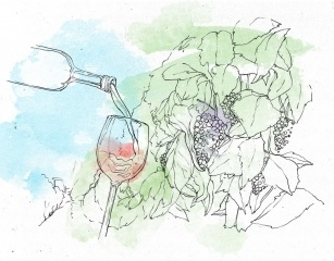 wine tasting dubrovnik